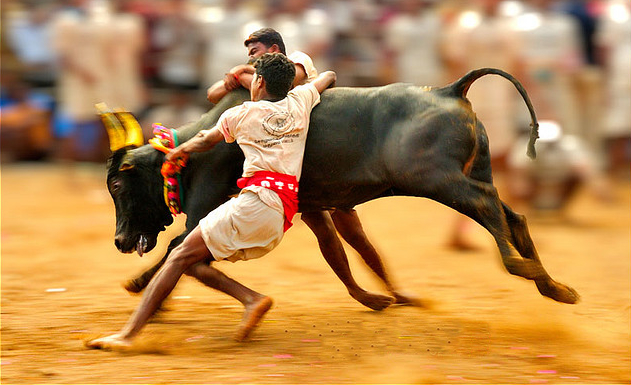 'Jallikattu is a traditional festival related to Tamilnadu's agricultural traditions. RSS is in favour of it': RSS's J Nandakumar